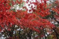 2014.11.14 15  福井 011.jpg