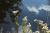 2015 9月 車山高原 飛鳥 283.jpg