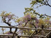 岡崎公園 006.jpg