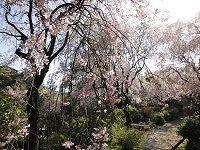 2013.4.19.20  京都 006.jpg