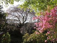 2013.4.19.20  京都 008.jpg